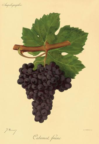 Uva Cabernet Franc vinhobasico