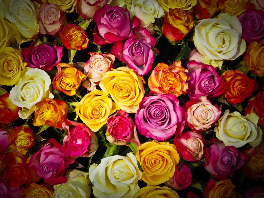 rosas aromas florais vinhobasico